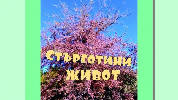 Книгата Стърготини живот от литературното ренде на Валери Георгиев представят в Благоевград